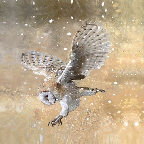 ct-barn-owl-in-snowstorm-500