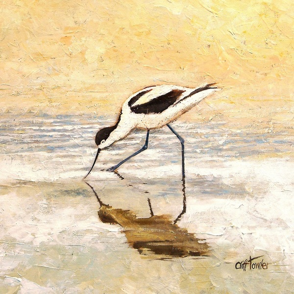 CT Avocet feeding 600