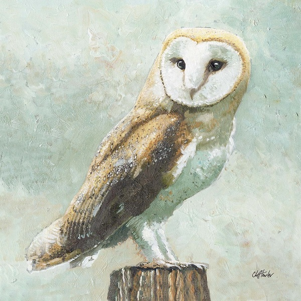 CT Barn Owl 1 600